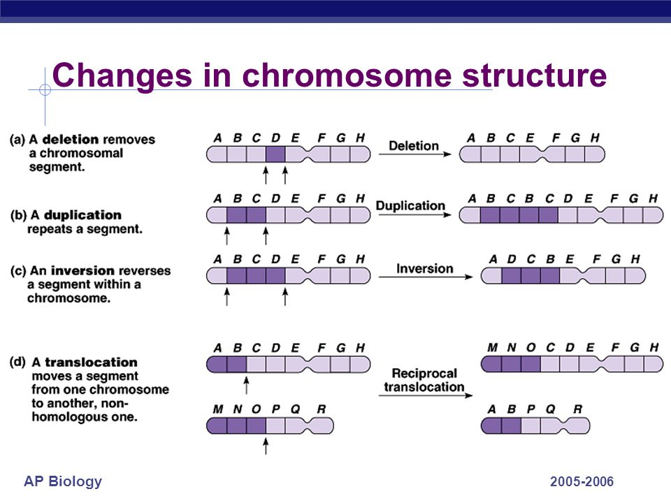 AP Biology 2005-2006 Changes in chromosome structure
