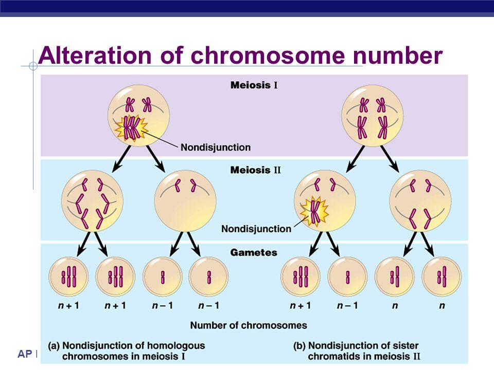 AP Biology 2005-2006 Alteration of chromosome number