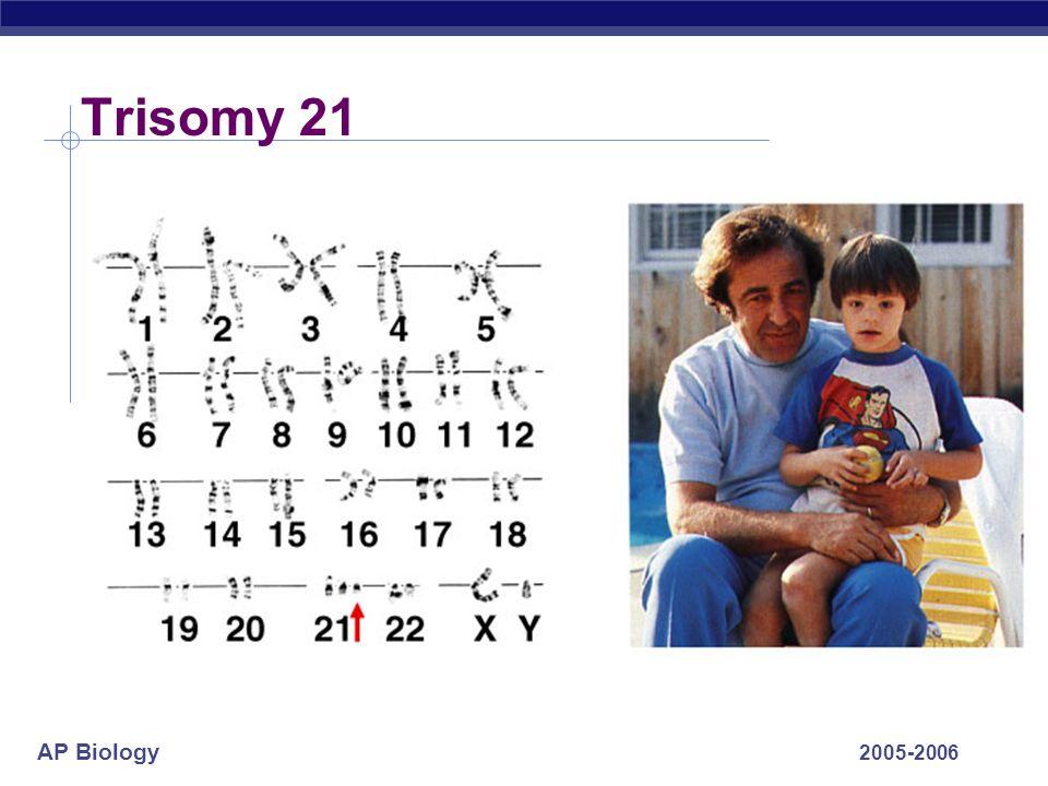 AP Biology 2005-2006 Trisomy 21