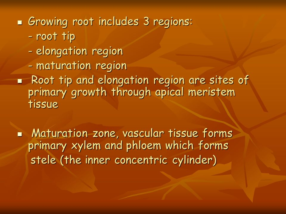Growing root includes 3 regions: Growing root includes 3 regions: - root tip - elongation region - maturation region Root tip and elongation region ar