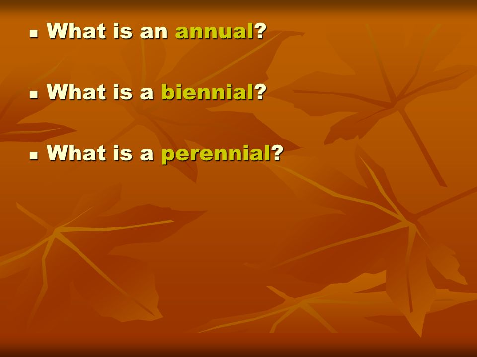What is an annual? What is an annual? What is a biennial? What is a biennial? What is a perennial? What is a perennial?