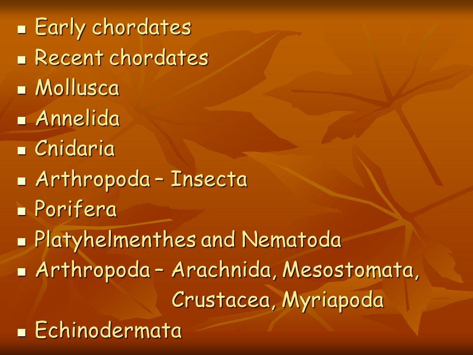 Early chordates Early chordates Recent chordates Recent chordates Mollusca Mollusca Annelida Annelida Cnidaria Cnidaria Arthropoda – Insecta Arthropod