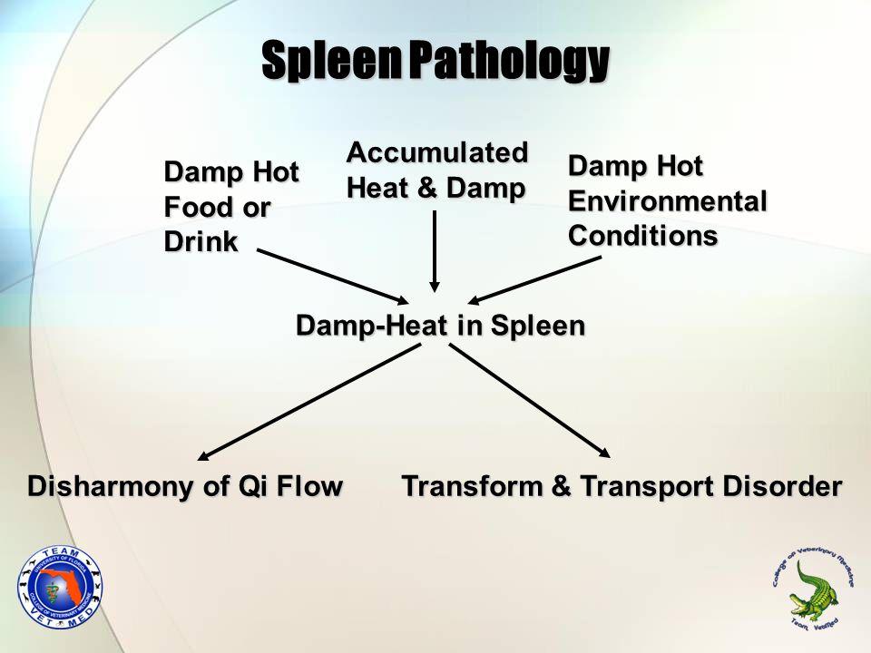 Spleen Pathology Damp Hot Food or Drink Damp Hot Environmental Conditions Damp-Heat in Spleen Transform & Transport Disorder Disharmony of Qi Flow Acc