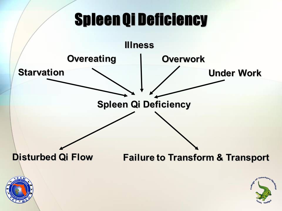 Spleen Qi Deficiency Overeating Starvation Failure to Transform & Transport Disturbed Qi Flow Illness Overwork Under Work