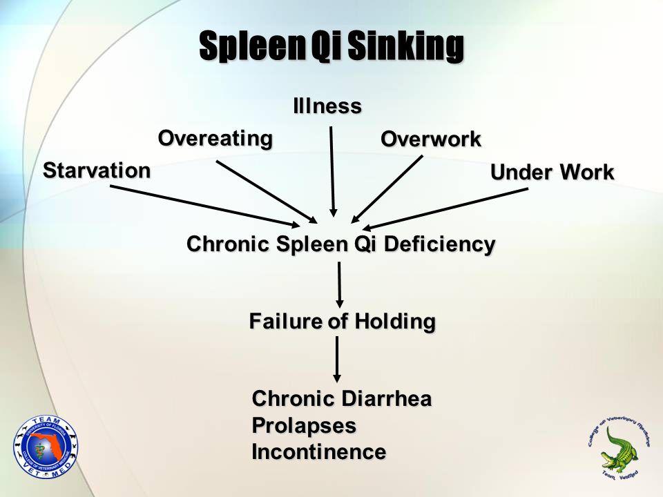 Spleen Qi Sinking Overeating Starvation Chronic Spleen Qi Deficiency Failure of Holding Chronic Diarrhea ProlapsesIncontinence Illness Overwork Under