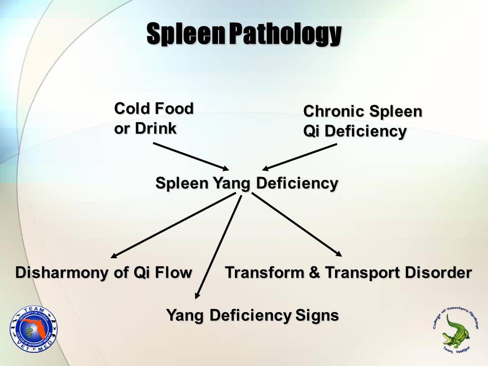 Spleen Pathology Cold Food or Drink Chronic Spleen Qi Deficiency Spleen Yang Deficiency Transform & Transport Disorder Disharmony of Qi Flow Yang Defi