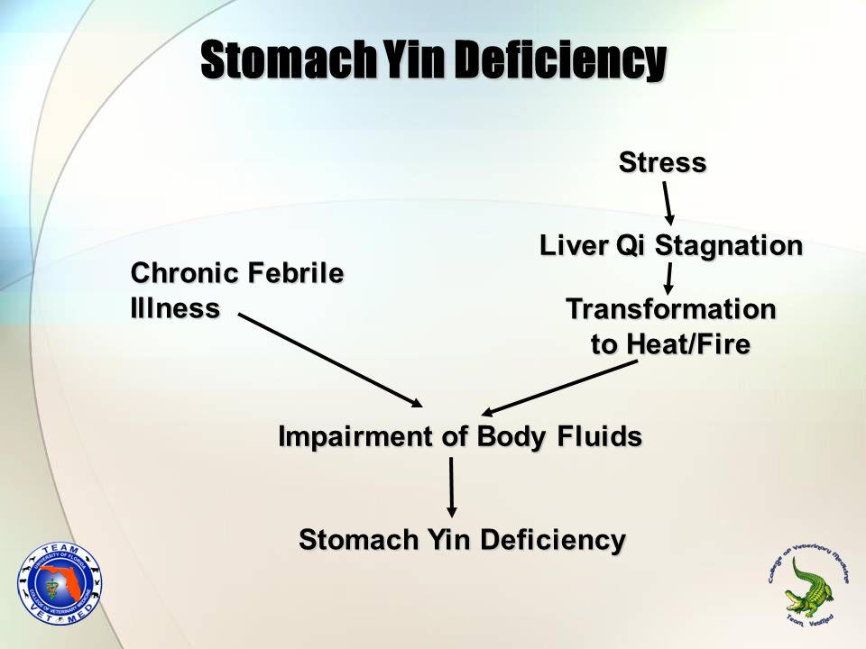Stomach Yin Deficiency Chronic Febrile Illness Impairment of Body Fluids Stomach Yin Deficiency Stress Liver Qi Stagnation Transformation to Heat/Fire