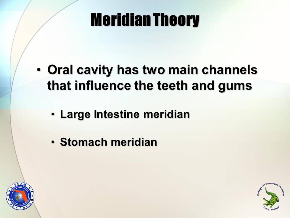 Meridian Theory Oral cavity has two main channels that influence the teeth and gumsOral cavity has two main channels that influence the teeth and gums