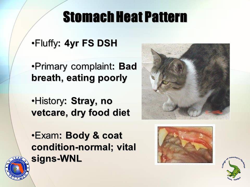 Stomach Heat Pattern Fluffy: 4yr FS DSHFluffy: 4yr FS DSH Primary complaint: Bad breath, eating poorlyPrimary complaint: Bad breath, eating poorly His