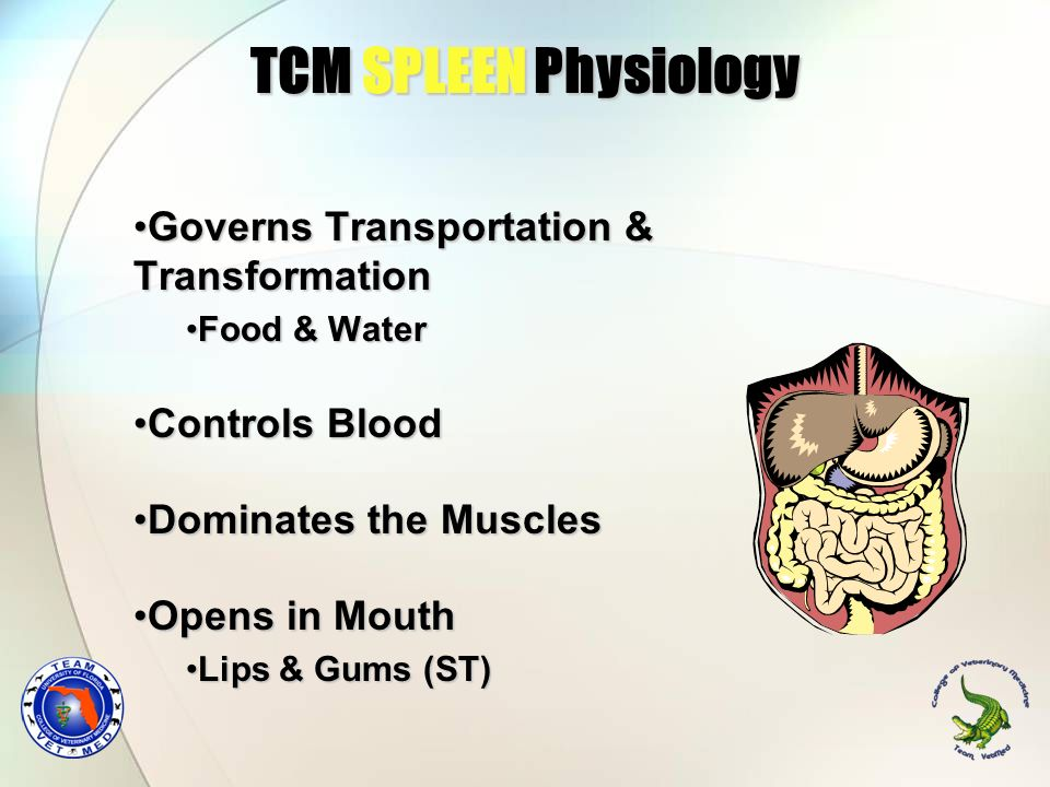 TCM SPLEEN Physiology Governs Transportation & TransformationGoverns Transportation & Transformation Food & WaterFood & Water Controls BloodControls B