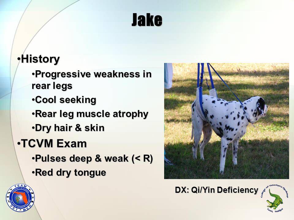 Jake HistoryHistory Progressive weakness in rear legsProgressive weakness in rear legs Cool seekingCool seeking Rear leg muscle atrophyRear leg muscle