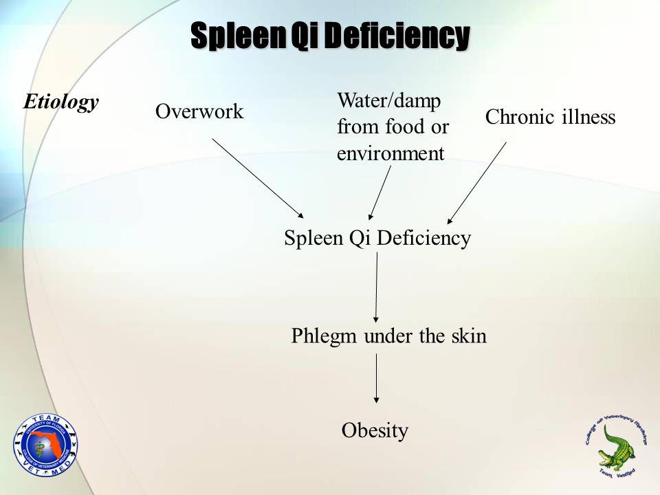 Spleen Qi Deficiency Etiology Water/damp from food or environment Chronic illness Overwork Spleen Qi Deficiency Phlegm under the skin Obesity