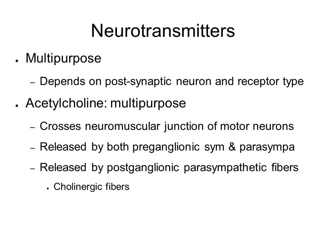 Neurotransmitters Multipurpose – Depends on post-synaptic neuron and receptor type Acetylcholine: multipurpose – Crosses neuromuscular junction of mot