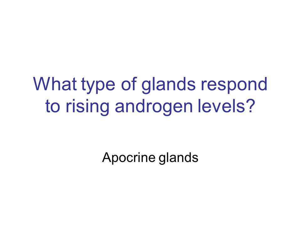 Apocrine glands