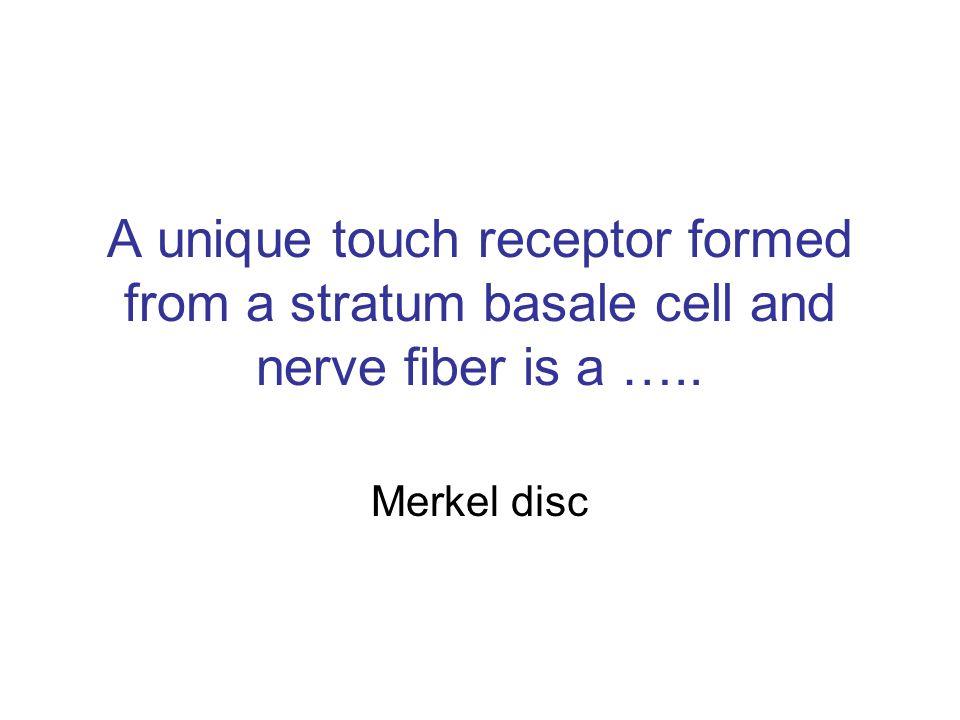 Merkel disc