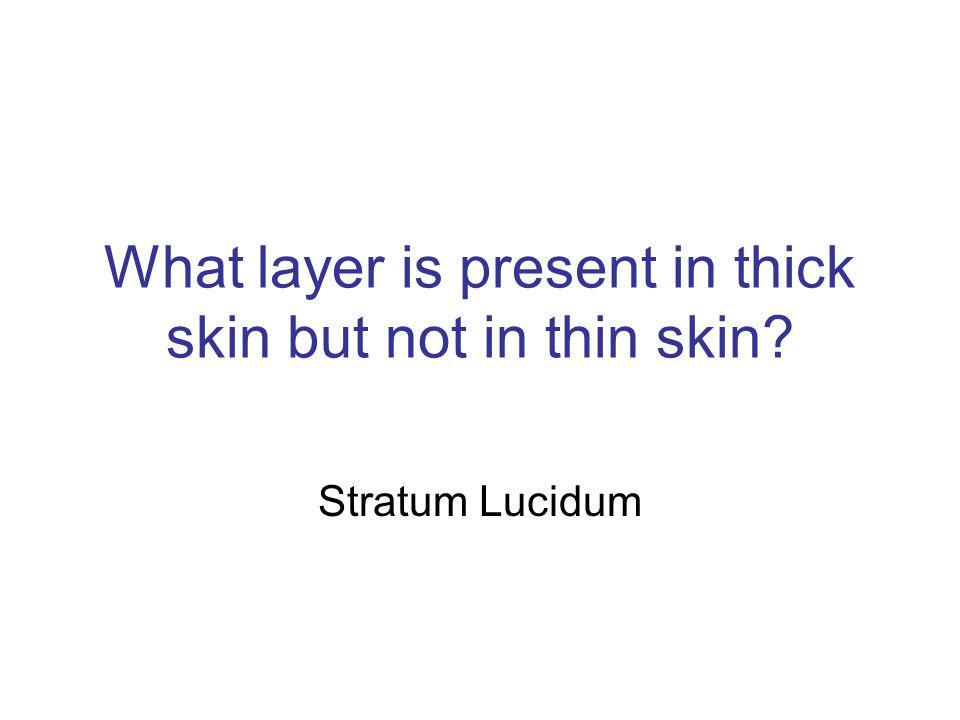Stratum Lucidum