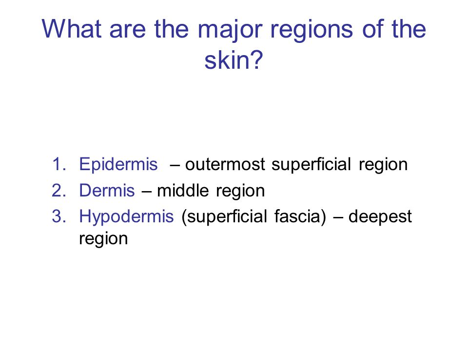 What does the skin Excrete?