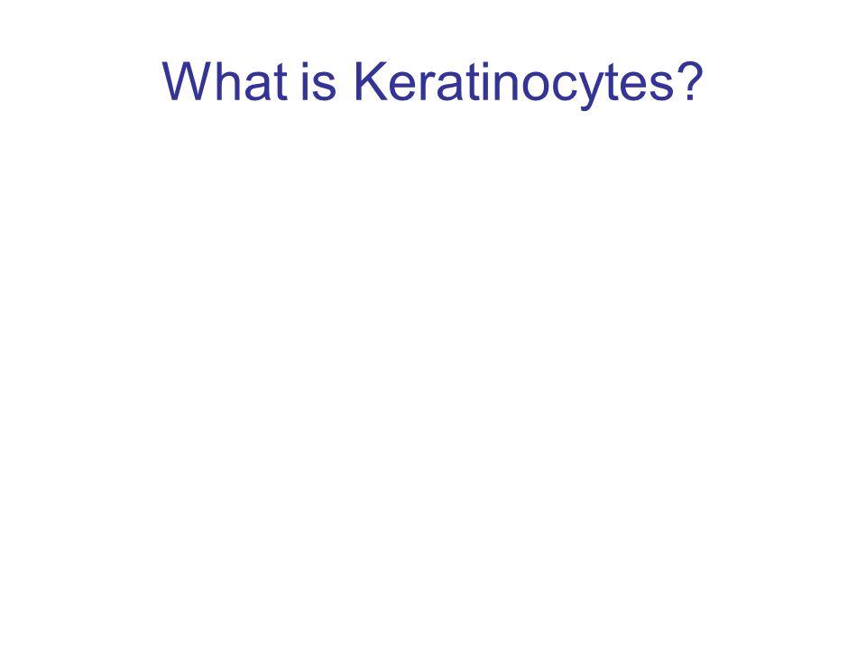 produce the fibrous protein keratin