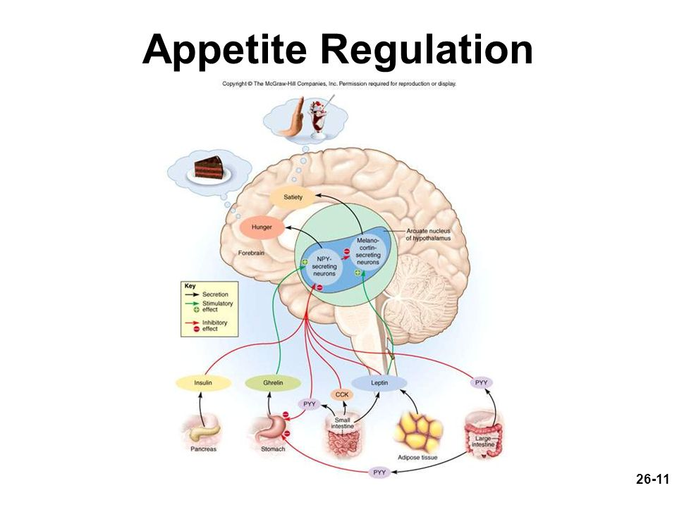 26-11 Appetite Regulation
