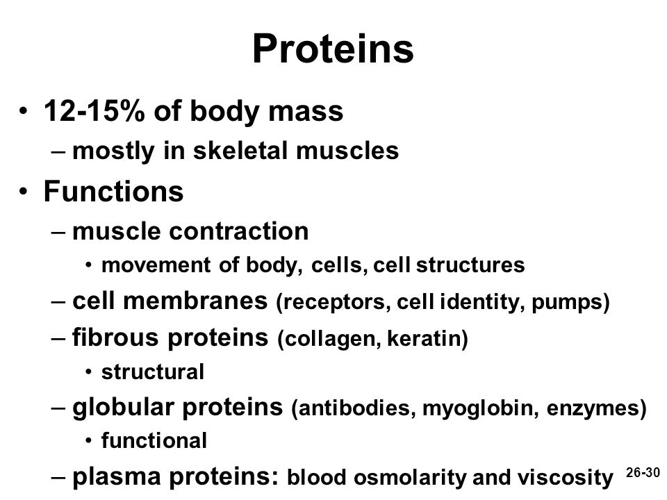 26-30 Proteins 12-15% of body mass –mostly in skeletal muscles Functions –muscle contraction movement of body, cells, cell structures –cell membranes