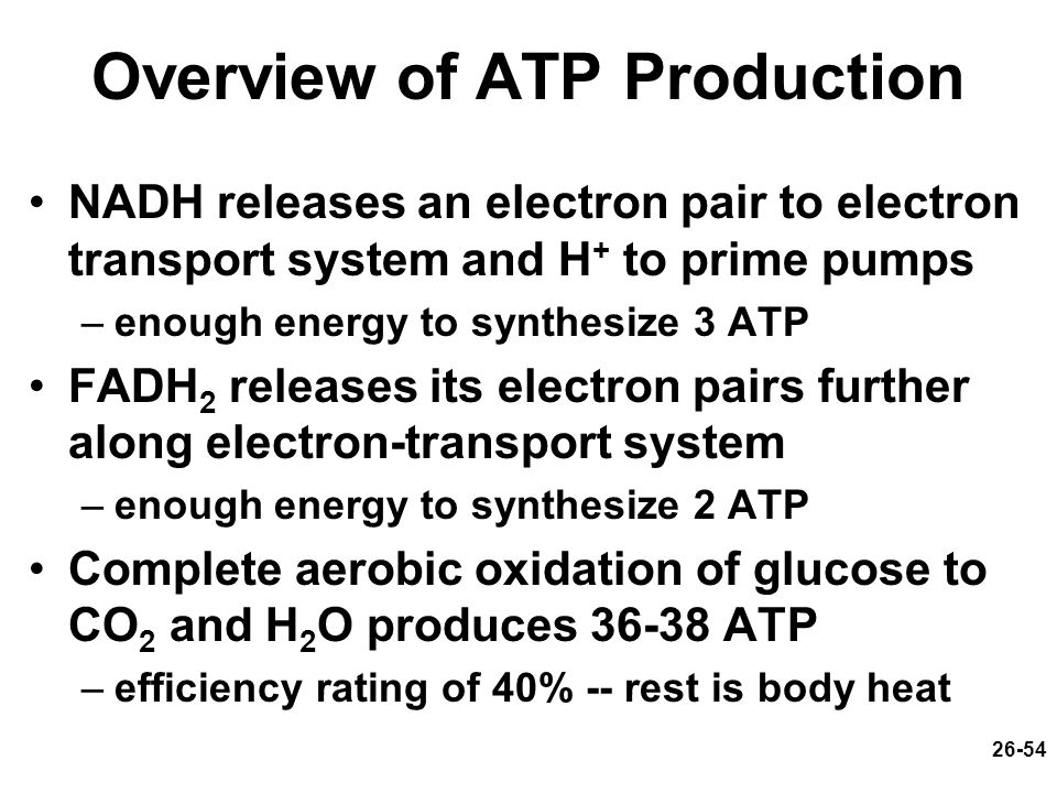 26-54 Overview of ATP Production NADH releases an electron pair to electron transport system and H + to prime pumps –enough energy to synthesize 3 ATP