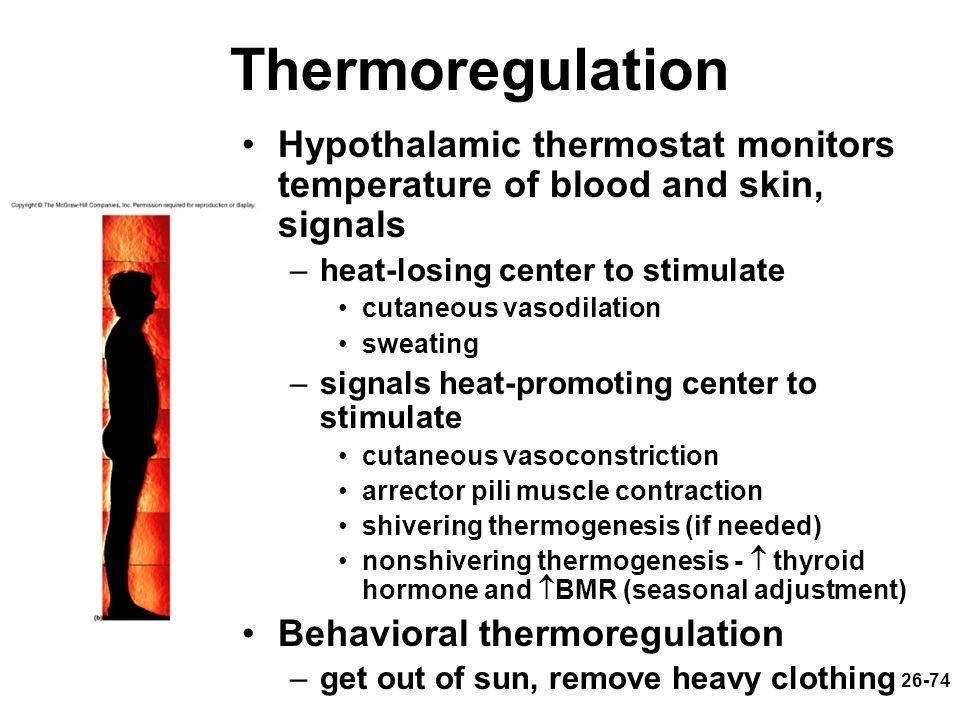 26-74 Thermoregulation Hypothalamic thermostat monitors temperature of blood and skin, signals –heat-losing center to stimulate cutaneous vasodilation