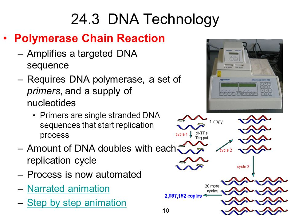 24.3 DNA Technology Polymerase Chain Reaction –Amplifies a targeted DNA sequence –Requires DNA polymerase, a set of primers, and a supply of nucleotid