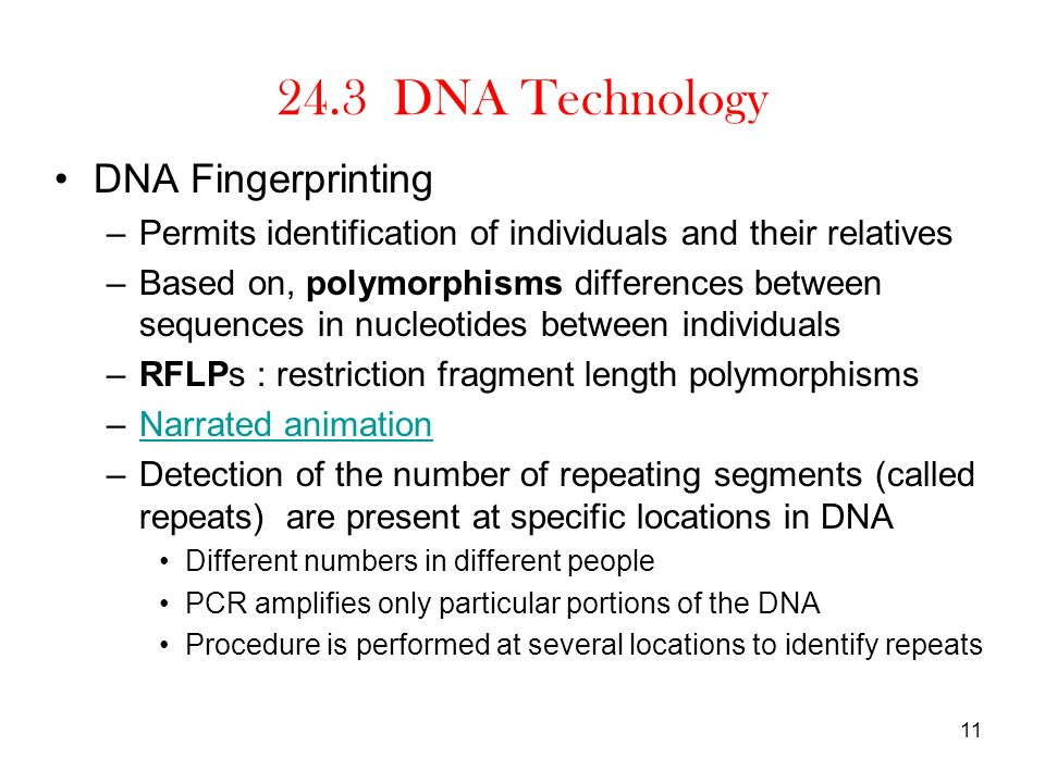 24.3 DNA Technology DNA Fingerprinting –Permits identification of individuals and their relatives –Based on, polymorphisms differences between sequenc