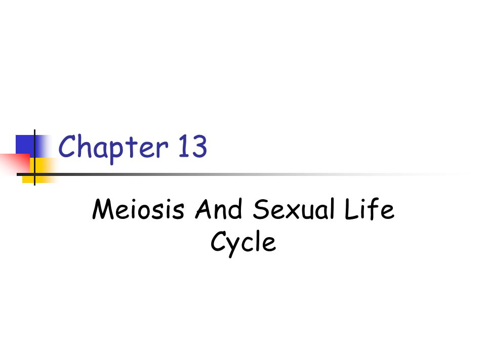 Chapter 13 Meiosis And Sexual Life Cycle
