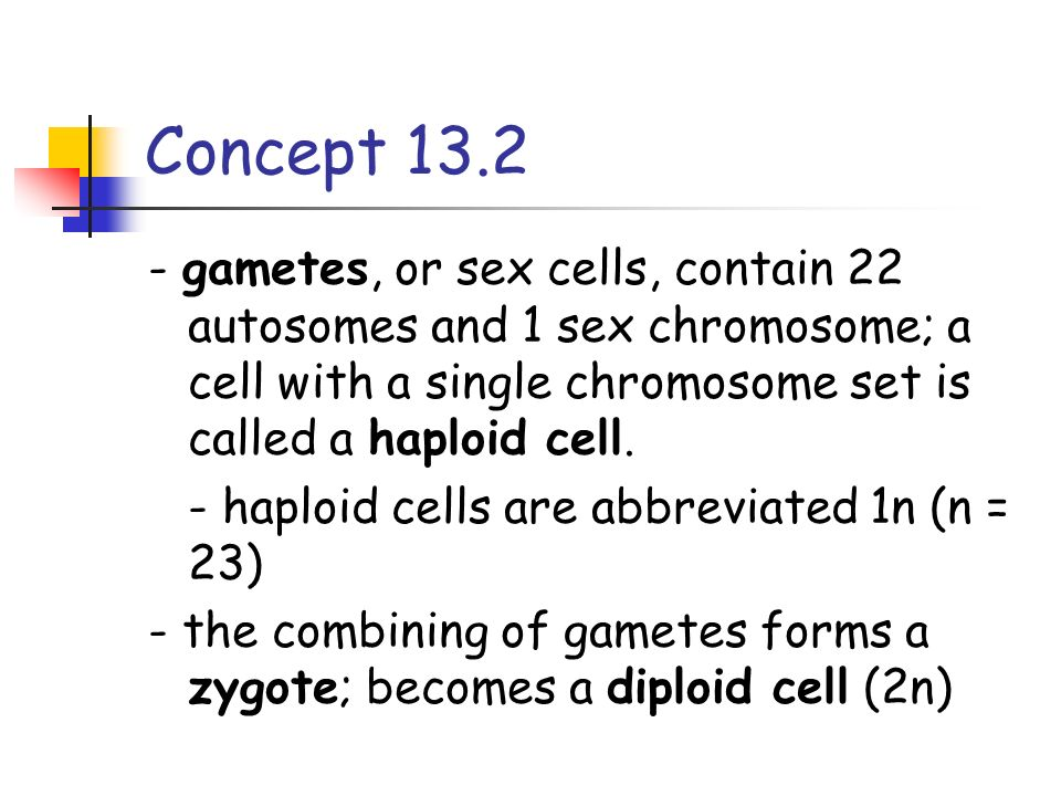 - gametes, or sex cells, contain 22 autosomes and 1 sex chromosome; a cell with a single chromosome set is called a haploid cell. - haploid cells are