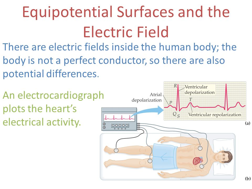 Equipotential Surfaces and the Electric Field There are electric fields inside the human body; the body is not a perfect conductor, so there are also
