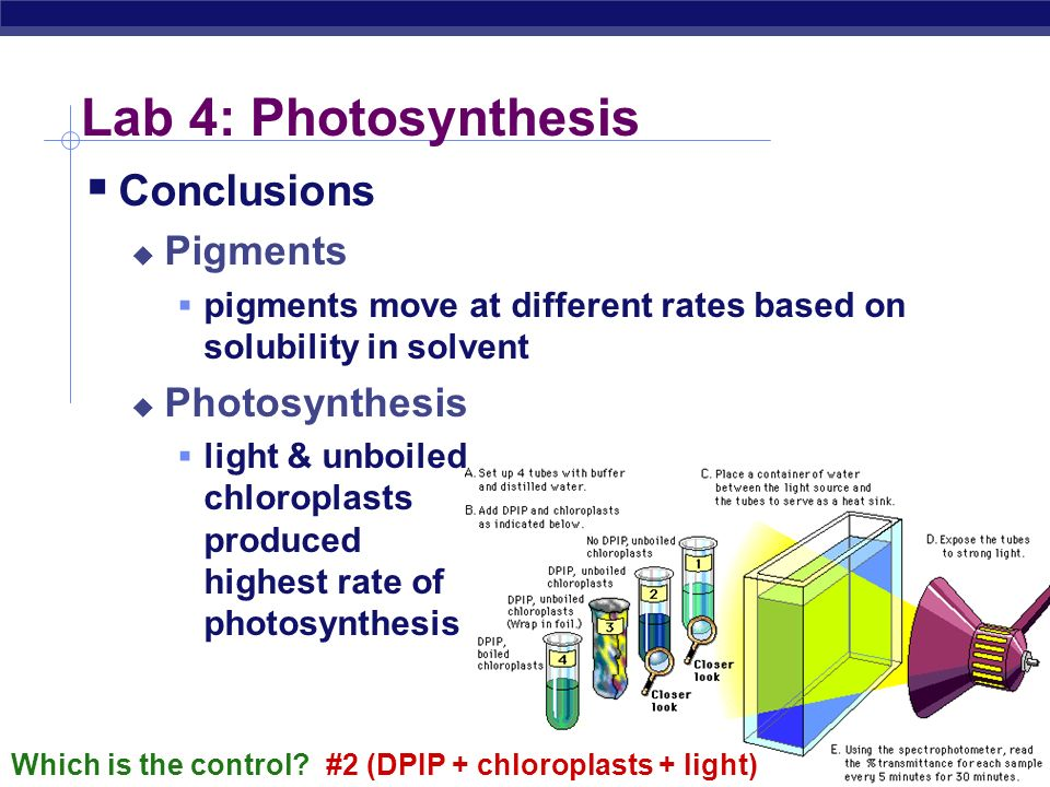 AP Biology Lab 4: Photosynthesis Concepts photosynthesis Photosystem 1 NADPH chlorophylls & other plant pigments chlorophyll a chlorophyll b xanthophy