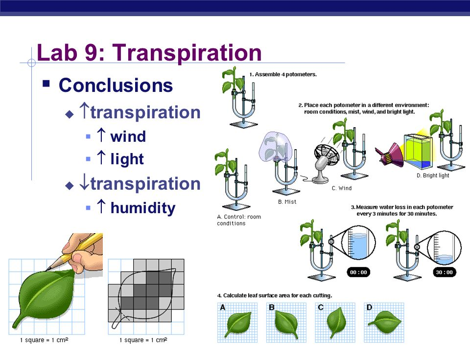 AP Biology Lab 9: Transpiration Concepts transpiration stomates guard cells xylem adhesion cohesion H bonding