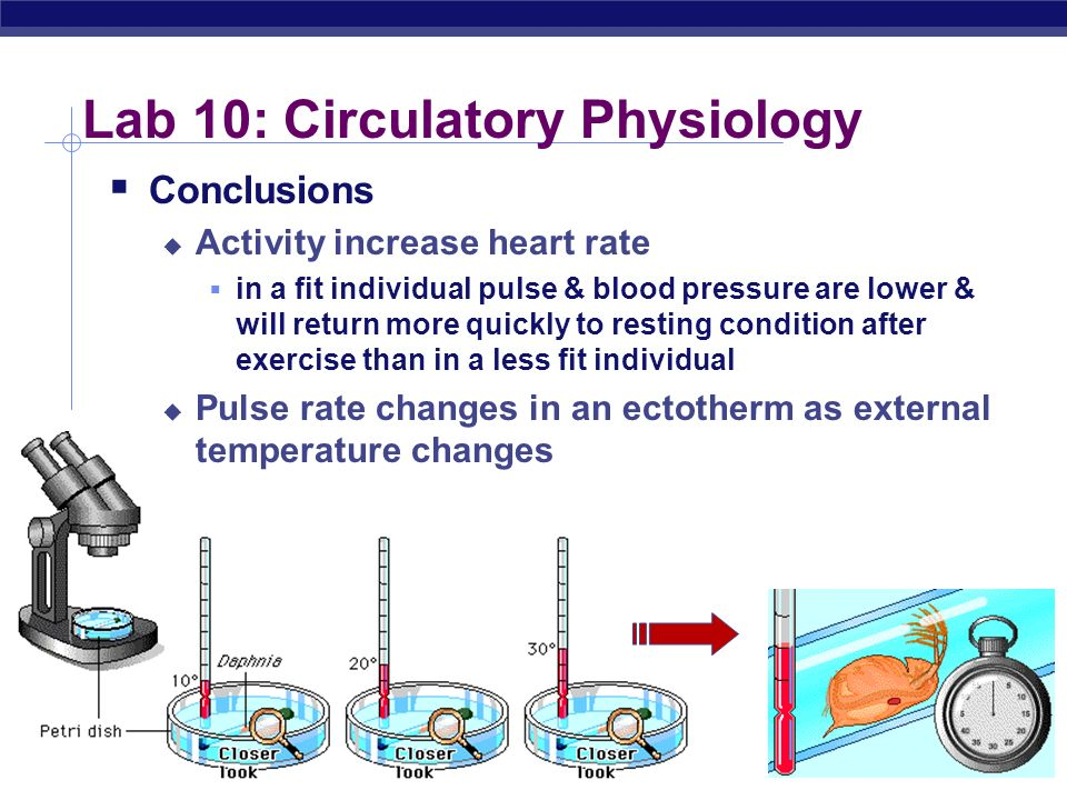 AP Biology Lab 10: Circulatory Physiology Concepts thermoregulation endotherm ectotherm Q 10 measures increase in metabolic activity resulting from in