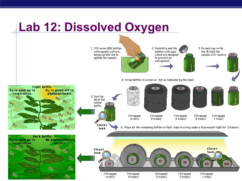 AP Biology Lab 12: Dissolved Oxygen Dissolved O 2 availability