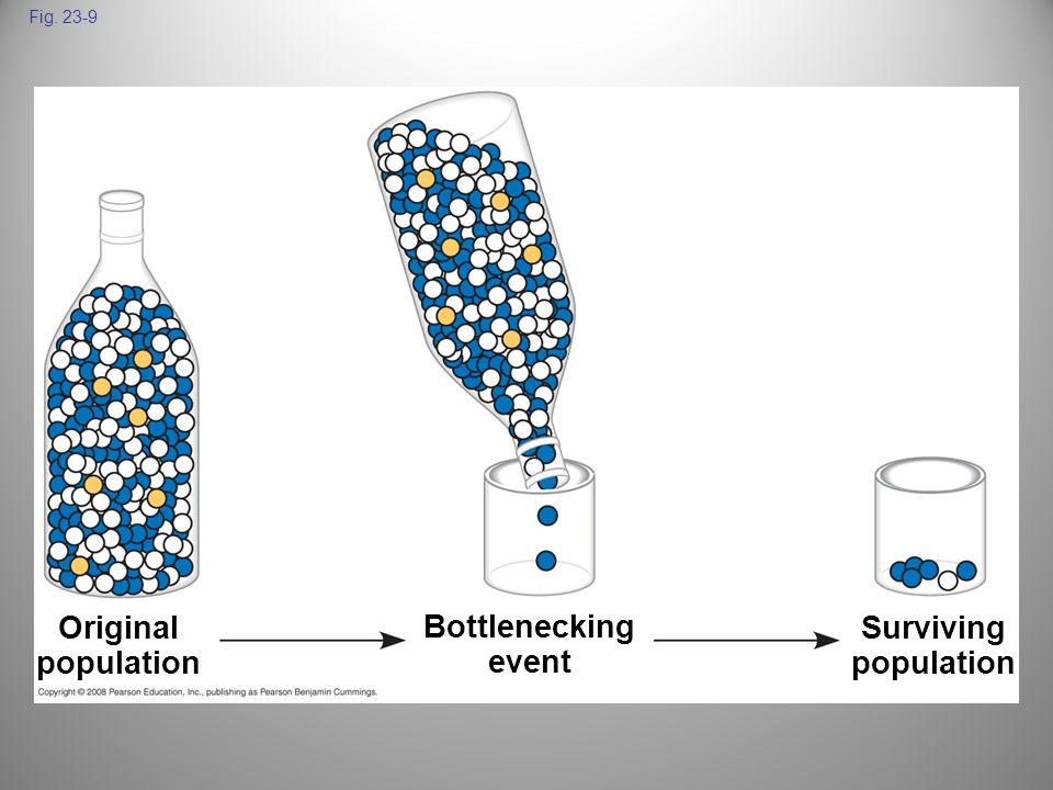Fig. 23-9 Original population Bottlenecking event Surviving population