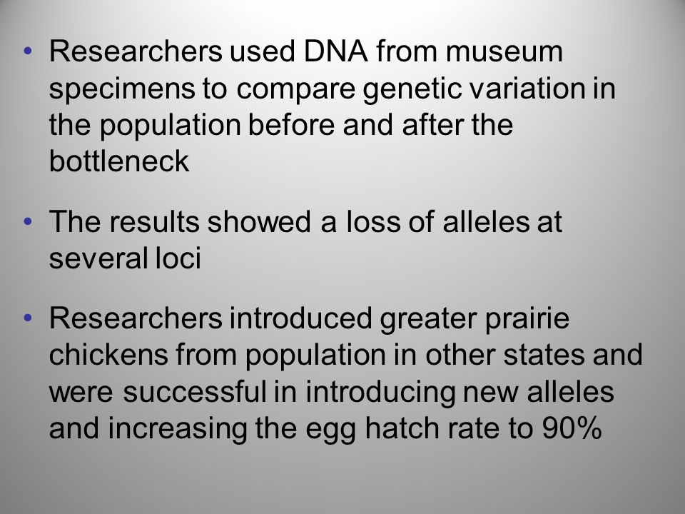 Researchers used DNA from museum specimens to compare genetic variation in the population before and after the bottleneck The results showed a loss of
