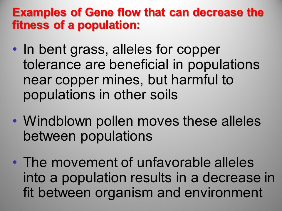 Examples of Gene flow that can decrease the fitness of a population: In bent grass, alleles for copper tolerance are beneficial in populations near co