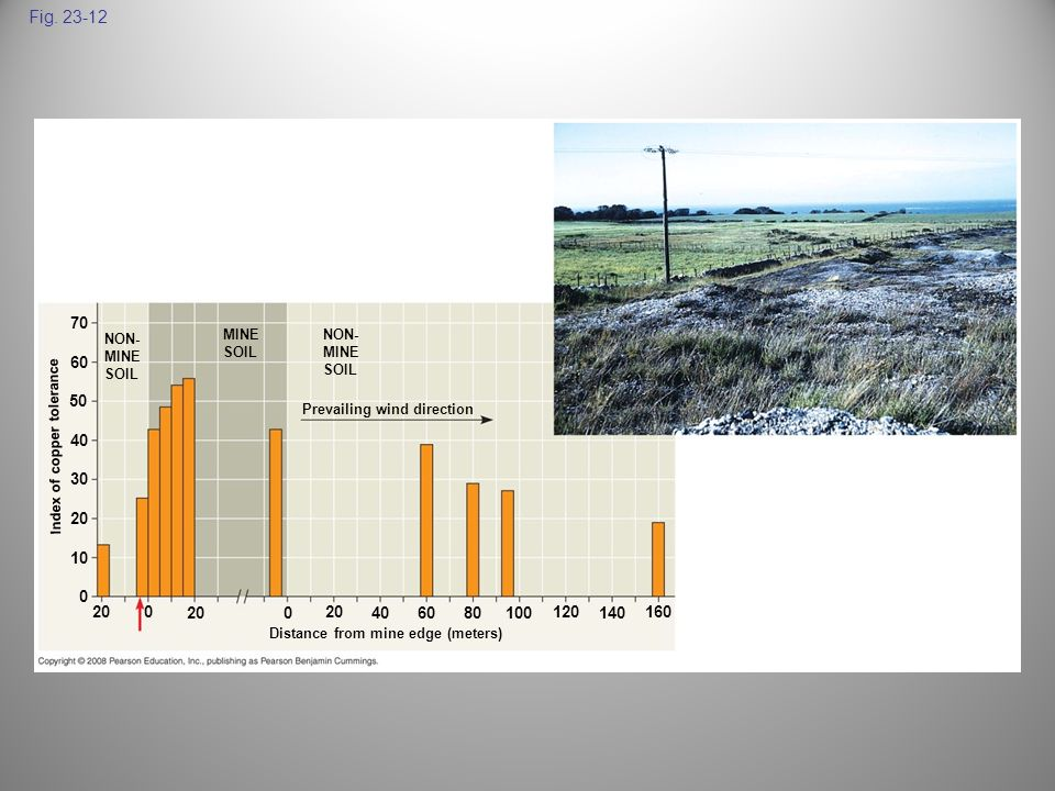 Fig. 23-12 NON- MINE SOIL MINE SOIL NON- MINE SOIL Prevailing wind direction Index of copper tolerance Distance from mine edge (meters) 70 60 50 40 30