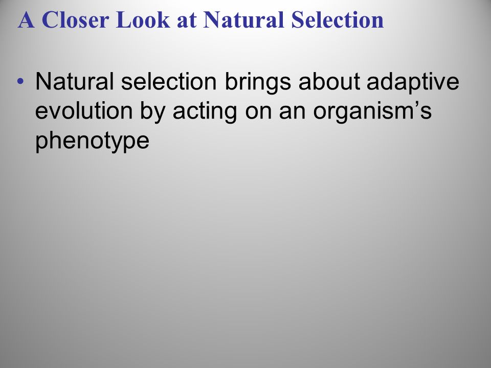 A Closer Look at Natural Selection Natural selection brings about adaptive evolution by acting on an organisms phenotype