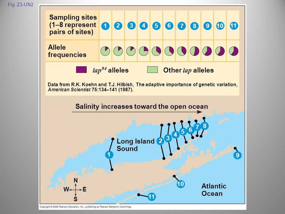 Fig. 23-UN2 Sampling sites (1–8 represent pairs of sites) Salinity increases toward the open ocean N Long Island Sound Allele frequencies Atlantic Oce