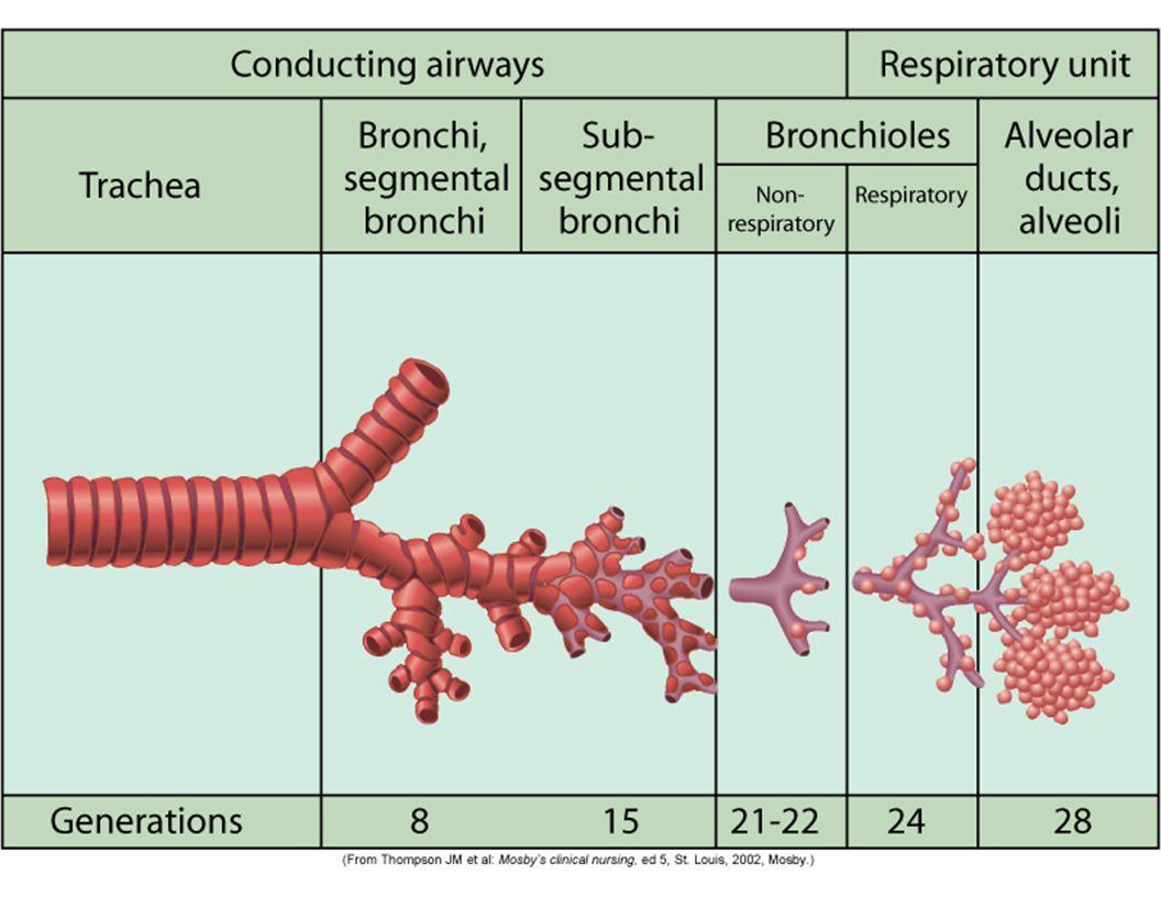 PFTs Measures of Volume Measures of Flow – FEV1 – Peak Flow Inspiratory Reserve Volume Expiratory Reserve Volume Residual Reserve Vol Tidal Volume Total Lung Capacity Vital Capacity