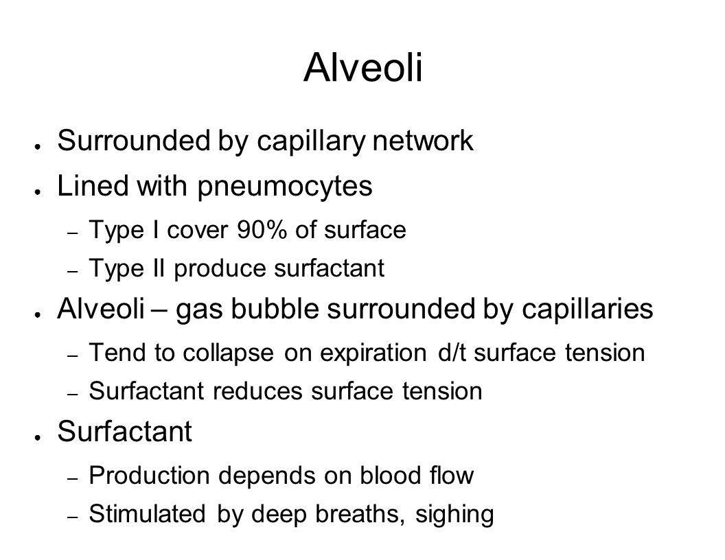 Alveoli Surrounded by capillary network Lined with pneumocytes – Type I cover 90% of surface – Type II produce surfactant Alveoli – gas bubble surroun