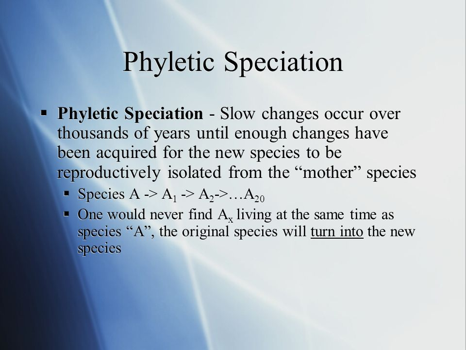 Phyletic Speciation Phyletic Speciation - Slow changes occur over thousands of years until enough changes have been acquired for the new species to be reproductively isolated from the mother species Species A -> A 1 -> A 2 ->…A 20 One would never find A x living at the same time as species A, the original species will turn into the new species Phyletic Speciation - Slow changes occur over thousands of years until enough changes have been acquired for the new species to be reproductively isolated from the mother species Species A -> A 1 -> A 2 ->…A 20 One would never find A x living at the same time as species A, the original species will turn into the new species