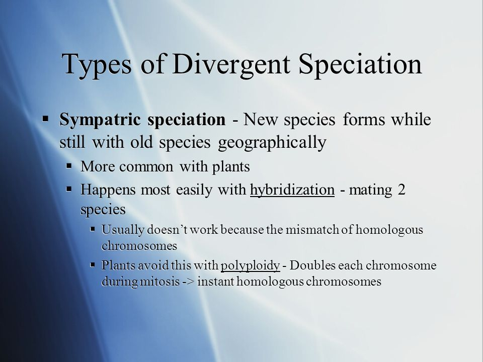 Types of Divergent Speciation Sympatric speciation - New species forms while still with old species geographically More common with plants Happens most easily with hybridization - mating 2 species Usually doesnt work because the mismatch of homologous chromosomes Plants avoid this with polyploidy - Doubles each chromosome during mitosis -> instant homologous chromosomes Sympatric speciation - New species forms while still with old species geographically More common with plants Happens most easily with hybridization - mating 2 species Usually doesnt work because the mismatch of homologous chromosomes Plants avoid this with polyploidy - Doubles each chromosome during mitosis -> instant homologous chromosomes
