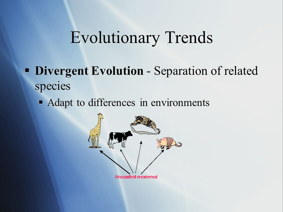 Evolutionary Trends Divergent Evolution - Separation of related species Adapt to differences in environments Divergent Evolution - Separation of related species Adapt to differences in environments