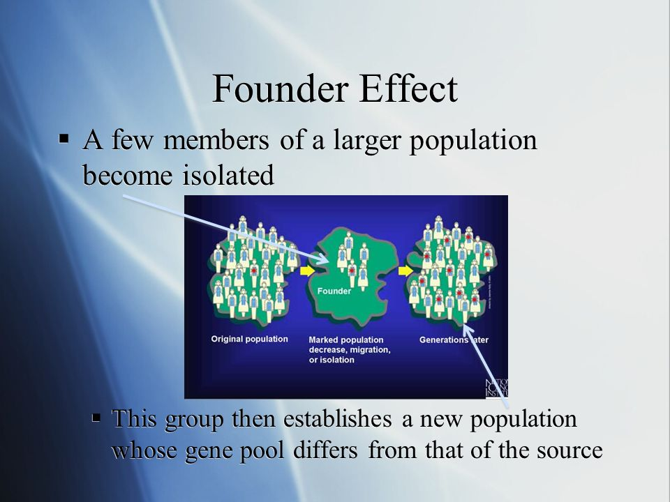 Founder Effect Example The Dutch population moving from their homeland of the Netherlands to South Africa, creating a small population In this population today, the rate of Huntingtons Disease is extremely high This is because a few people out of the small amount of original settlers had the disease, thus there was a higher chance for people to inherit it than in the large population Therefore, more people have the disease The Dutch population moving from their homeland of the Netherlands to South Africa, creating a small population In this population today, the rate of Huntingtons Disease is extremely high This is because a few people out of the small amount of original settlers had the disease, thus there was a higher chance for people to inherit it than in the large population Therefore, more people have the disease