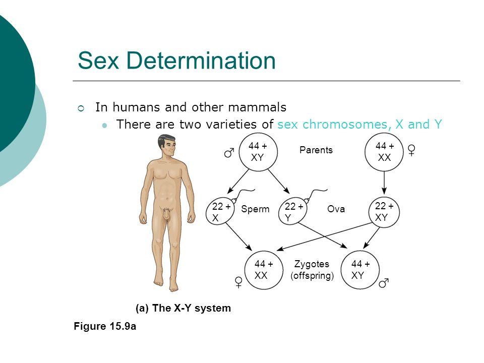 Zw Sex Determination System 115