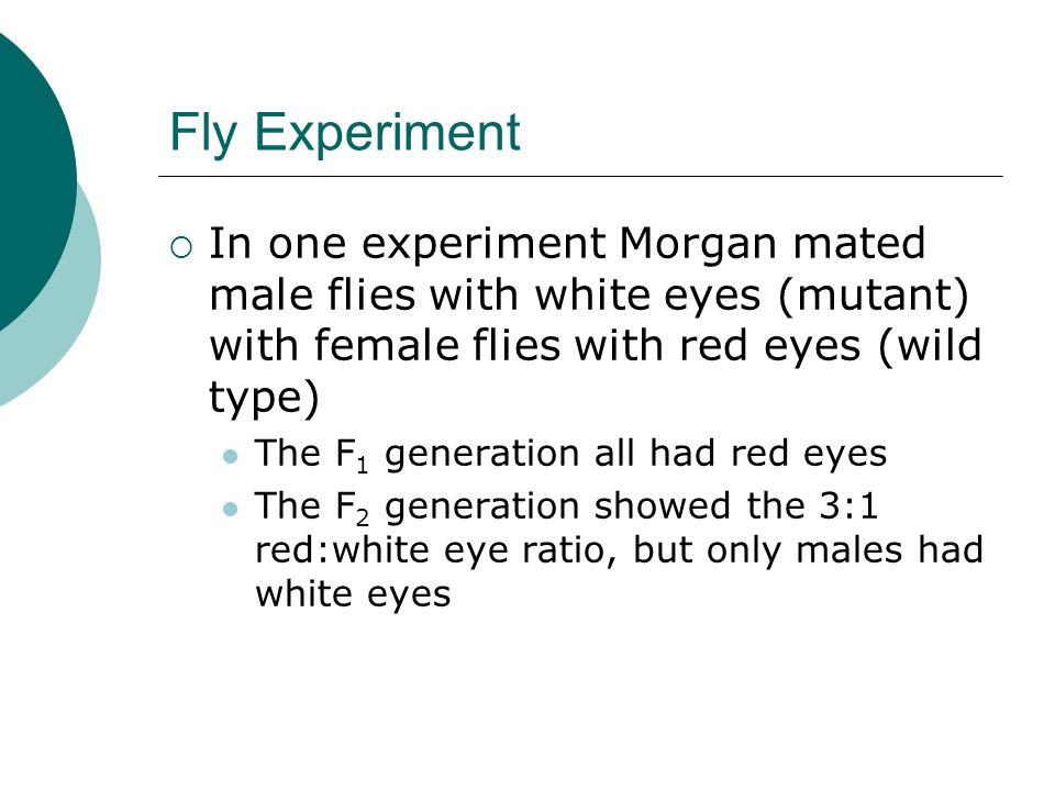 Fly Experiment In one experiment Morgan mated male flies with white eyes (mutant) with female flies with red eyes (wild type) The F 1 generation all h