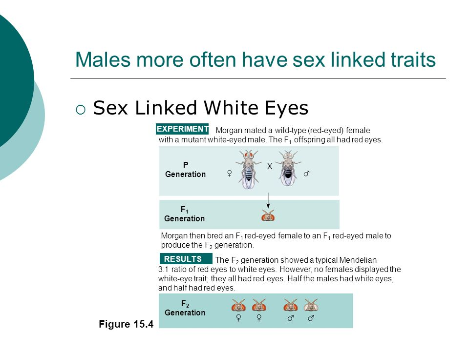 Males more often have sex linked traits Sex Linked White Eyes Figure 15.4 The F 2 generation showed a typical Mendelian 3:1 ratio of red eyes to white